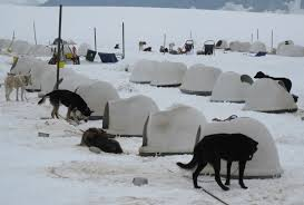 Dog Igloos Practical Travel Insights Glacier Viewing And Dog Sleigh Riding