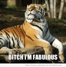 I Am Fabulous Meme - shut up bitch i am fabulous and you know it funny pinterest