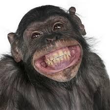 48 stocks at monkey pic group