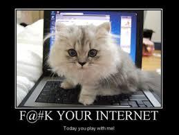 Cat Laptop Meme - kitty wants attention