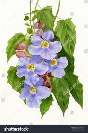 Blue Flower Vine - blue sky vine watercolor painting illustration stock illustration