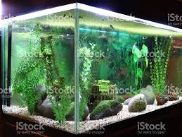 Aquarium Tropical Plants Image Of Tropical Aquarium Fish Tank With Snails Duckweed