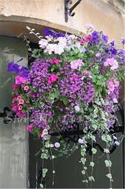popular climbing flowers plant buy cheap climbing flowers plant