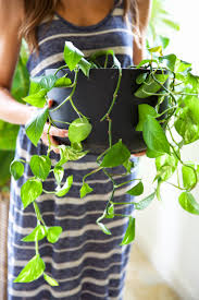 How To Keep House by How To Keep Your Houseplants Green U0026 Gorgeous Camille Styles
