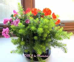 Indoor Flowering Plants by Colorful Kalanchoe Visit Us At Indoor Flowering Flowers Colorful