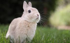 bunny rabbit cute free desktop hd desktop wallpaper widescreen