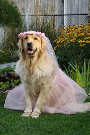 364 best sharp dressed pets images on pinterest animals