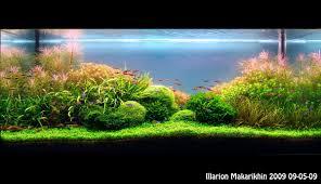 japanese aquascape aquascape of the month january 2010