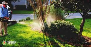Best Mosquito Killer For Backyard 5 Best Mosquito Fogger Reviews To Completely Kill Those Pesky Pests