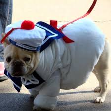 Doggy Halloween Costumes Cutest Dog Halloween Costumes