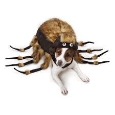 top 10 dog halloween costumes for trick or treating in 2016