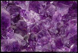 musings from the marsh the amethyst