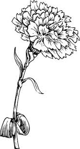 Flower Designs For Drawing Carnation Flower Drawing How To Draw A Carnation Step By Step