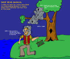 drop koala bear colour jezzy fezzy deviantart