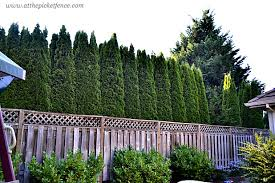 lattice turned deck privacy screen at the picket fence