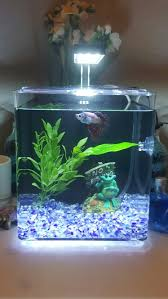 betta cube aquarium for my japanese fighter fish bruce bruce s