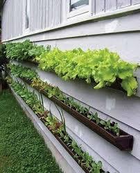 Backyard Planter Ideas Photo Of Backyard Planter Ideas Ipe Planter Box Home Design Ideas