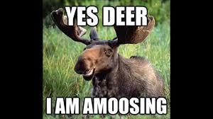 Funny Deer Memes - deer memes com net web hahahah funny video youtube