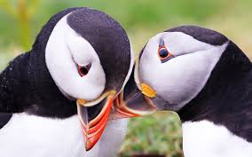 Puffin Meme - unpopular opinion puffin gets comforted by a friend that can