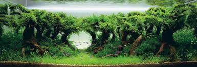 how to begin aquascaping in your aquarium aquescaping