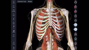 essential anatomy 3 apk scharr app hack essential anatomy