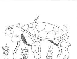 facts u0026 discovery sea turtle exploration