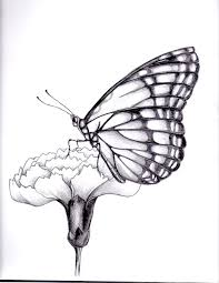 drawings of flowers and butterflies my drawing of a butterfly
