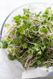 how to grow microgreens indoors wholefully