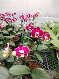 Orchid Plant Top 8 Varieties Of Orchids Flowers In India Shubham Gupta