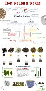 herbal black or green how to know which tea offers the best