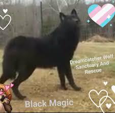 dreamcatcher wolf sanctuary and rescue organization