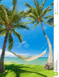 wallpaper tropics sand beach ocean palm trees hammocks hd recomended for you