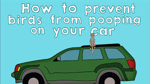 Scare Birds Away From Patio by How To Prevent Birds From Pooping On Your Car A 2d Animation