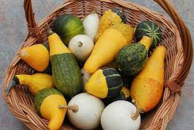 harvesting and drying decorative gourds space for