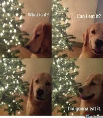Christmas Dog Meme - dog and a christmas tree by zwer meme center