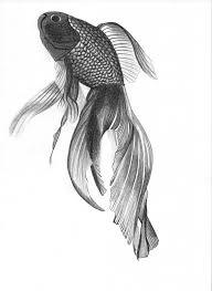 pencil drawing fish angelfish donotseeme on deviantart drawing