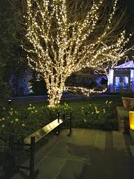 how to put lights on a tree outside outdoor tree lighting ideas outdoor designs