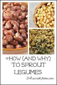 legumes cuisine how and why to sprout legumes dr s kitchen