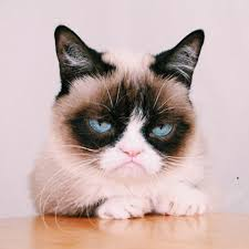 Grumpy Meme Face - picture of angry cat face meme best feeling photos desi triple x