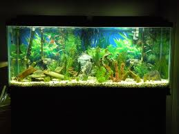 55 gallon aquarium light led aquarium moonlights