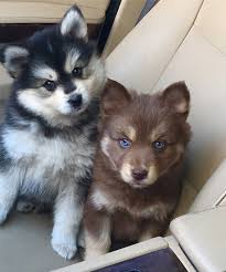 the cutest puppies on instagram dog instagram and animal
