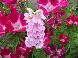Cheap Flower Seeds - online get cheap flowers seeds aliexpress com alibaba group