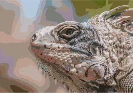 iguana island clipart iguana iguana from margarita island
