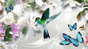 hd hummingbird wallpaper 38 hummingbird wallpapers id 14obe