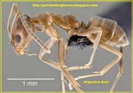 house pest control pest control list of house ants natural pest control