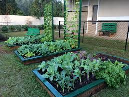 flower gardening 101 raised bed gardening 101 gardening in the panhandle