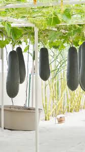 22 best hydroponic blissings images on pinterest hydroponic
