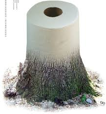 trees that used for paper is to grow and easy to