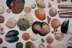 seashells wikiquote