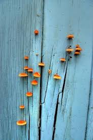 rusty nails peeling turquoise mint paint beautiful decay time